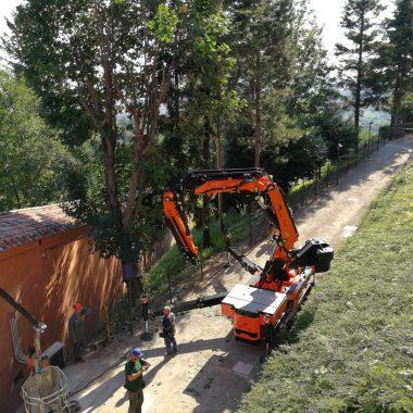 Beschneiden und Fällen von Bäumen